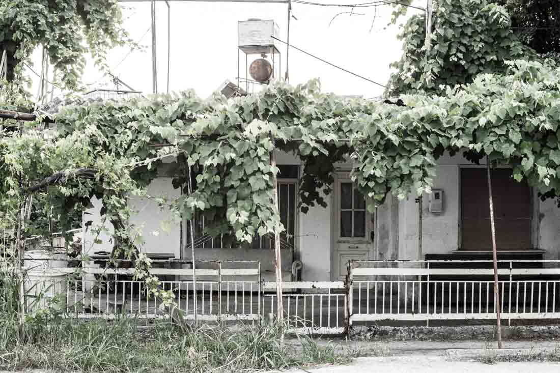 An old house in village overgrown with grapes