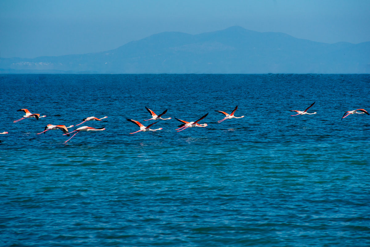 Flamingo alkyona beach