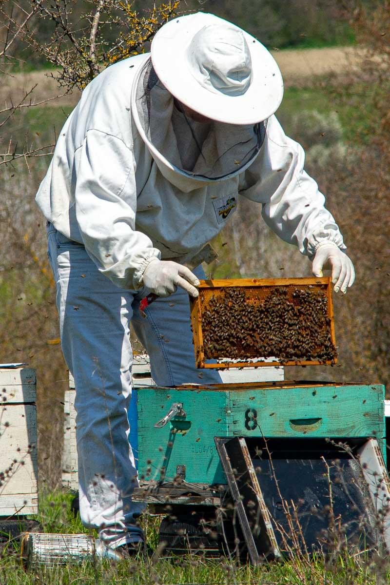 beekeeper in Greece